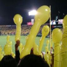 黄色風船乱舞!