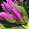 敬老の日 とびきりの笑顔を花で贈ろうの画像