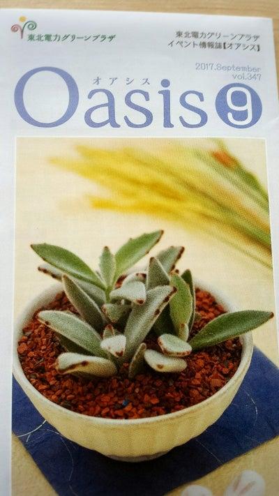 oasis9
