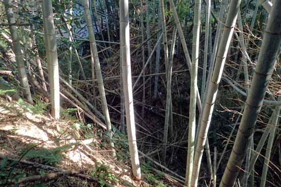 【写5】検見崎城