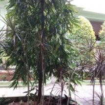 バリの地で自然に護ら…