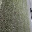 外壁のコケ、藻の原因…