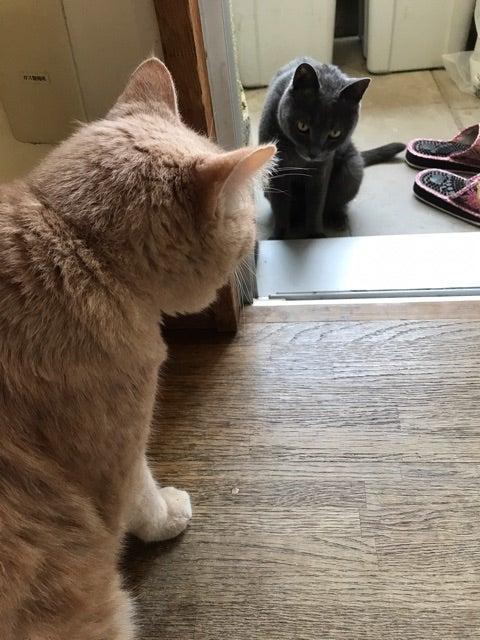 親に盾突く   我が家は 9匹の猫がいる