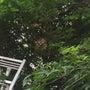 スズメバチの巣が~