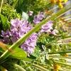 根つきの花束『ルーティブーケ』の画像