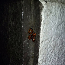 てんとう虫の家族発見