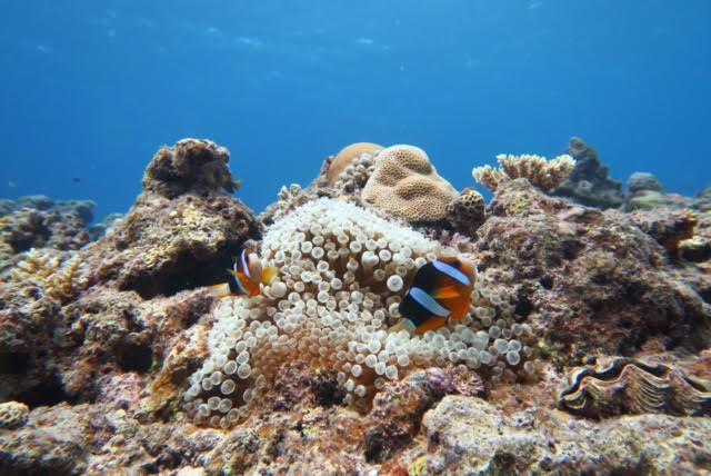 沖縄ダイビング18