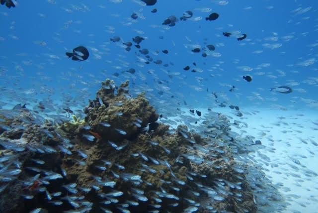 沖縄ダイビング14