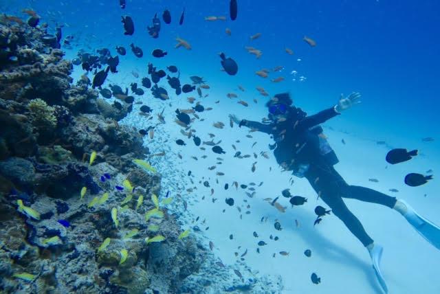 沖縄ダイビング13