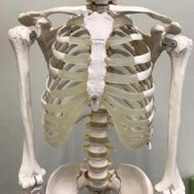 胸部の運動学の基礎