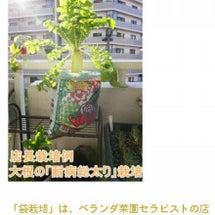 プランター菜園  枝…