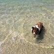 犬と泳ぐ  Let'…