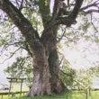 トトロの木と苔の神社