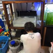サンゴ水槽リニューア…