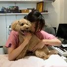 犬のナチュラルセラピーがすごい!の記事より