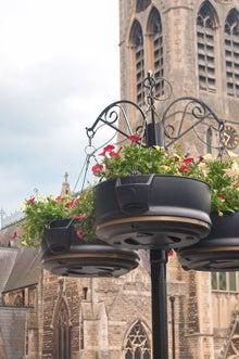 バースの街にある鉢花(ぱくたそ)