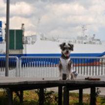 お船の公園♪