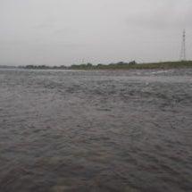 九頭竜川で友釣りにて…