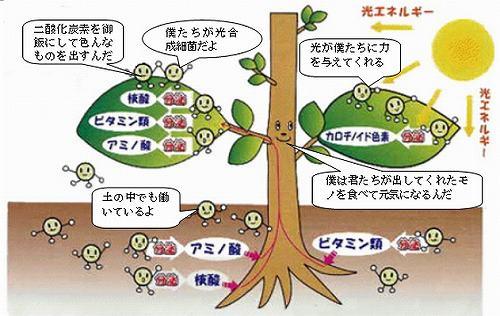 光合成細菌と乳酸菌がスゴイ✨✨ |...