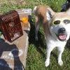なんと 秋田犬はやちゃん。。。のブログタイトル変更!!の画像