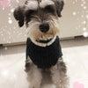 10/1(日)犬黒屋イベントについて♪の画像