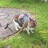猫さまの予防接種の画像