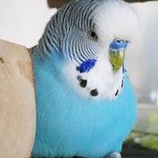 ドイツの鳥のお医者さまインタビュー
