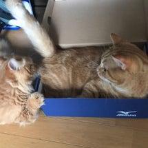 今日の箱はミズノ。