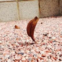 葉っぱが立った♫