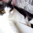 窓際に佇む猫