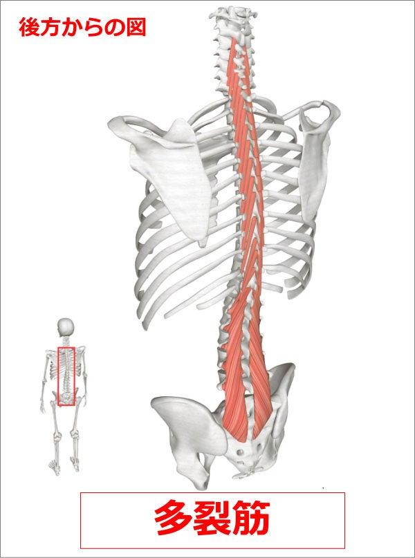 多裂筋の機能低下 | 術後腰下肢...