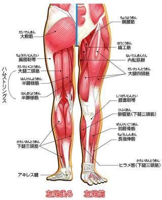 筋肉 おしり