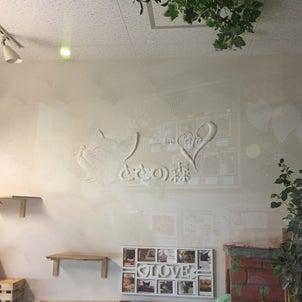 猫カフェととの森@ゆめまち習志野台ショッピングモールの画像