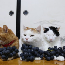 のせ猫 葡萄