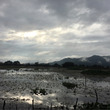 2017年 伊庭内湖