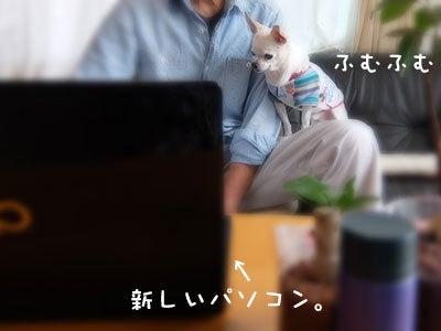 20170924チワワの小太郎