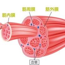 筋膜リリース de 脚線整美!の記事に添付されている画像
