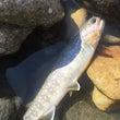 秋の東北渓流釣行