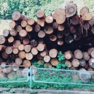 檜の原木の画像