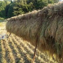 今年の稲刈り終了!1