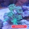 珊瑚セールの画像