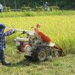 【レポート】稲刈りし…