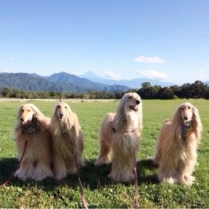 八ヶ岳への画像
