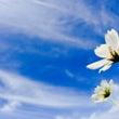 蓮の花の導き