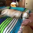 なぜベッドを縦に使う…