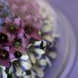 胡蝶蘭のボトルフラワ…