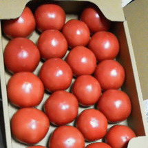 桃太郎トマト