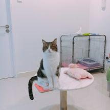 マレーシアで猫を飼っ…