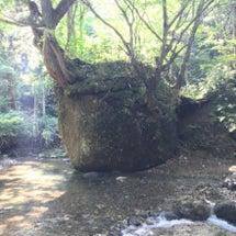森林浴〜♪