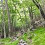 五葉山hike71